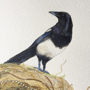 A close up image of the detail of the Magpie Watercolour Painting