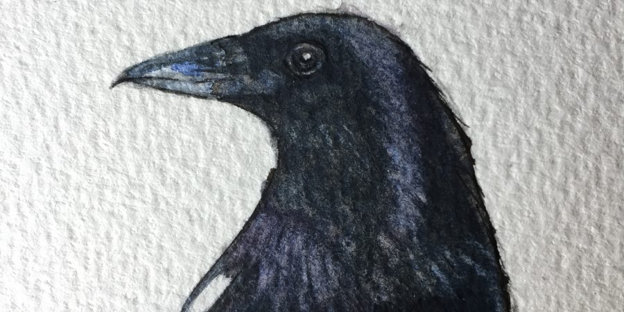 A close up of the finished magpie painting
