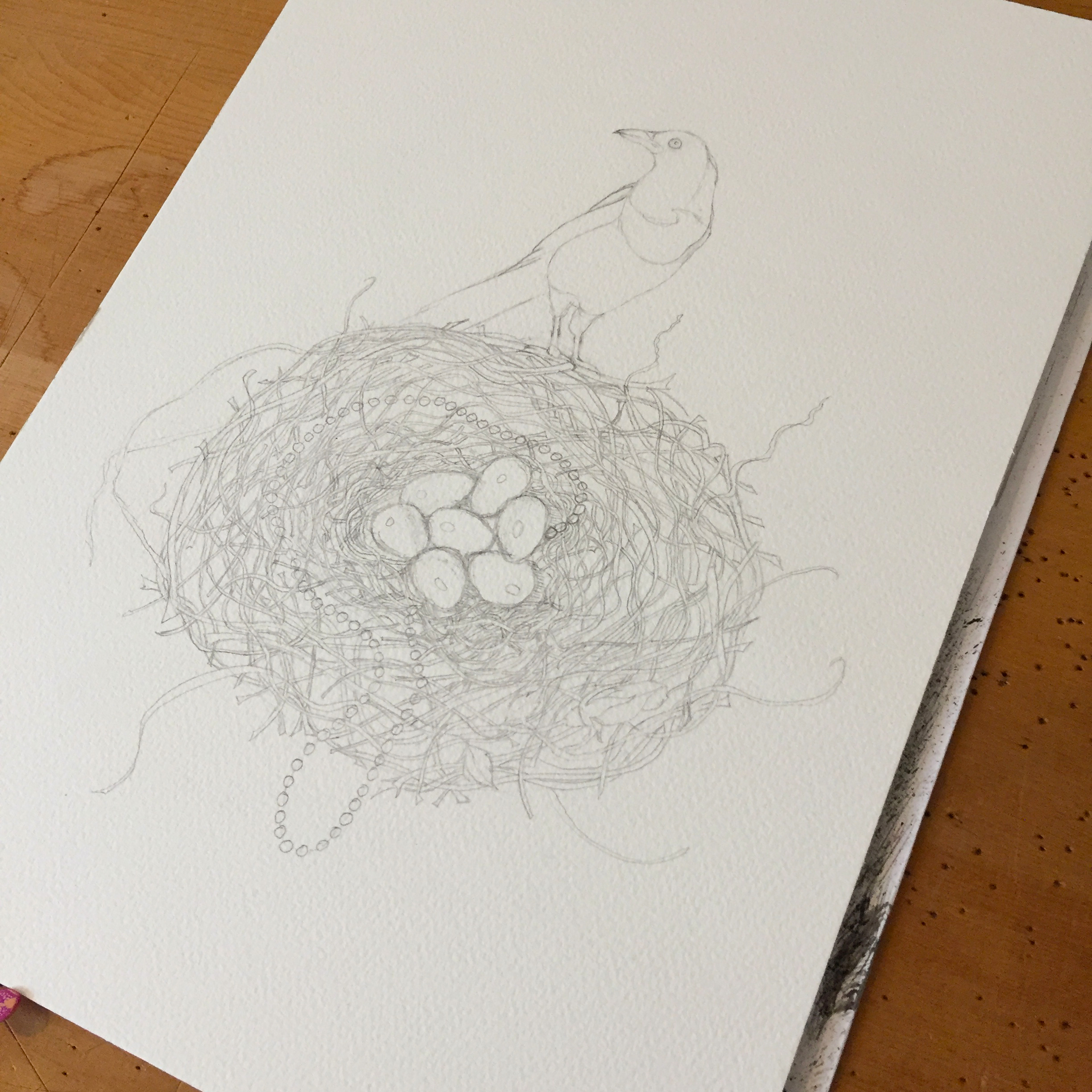 A photograph of the finished Magpie pencil sketch
