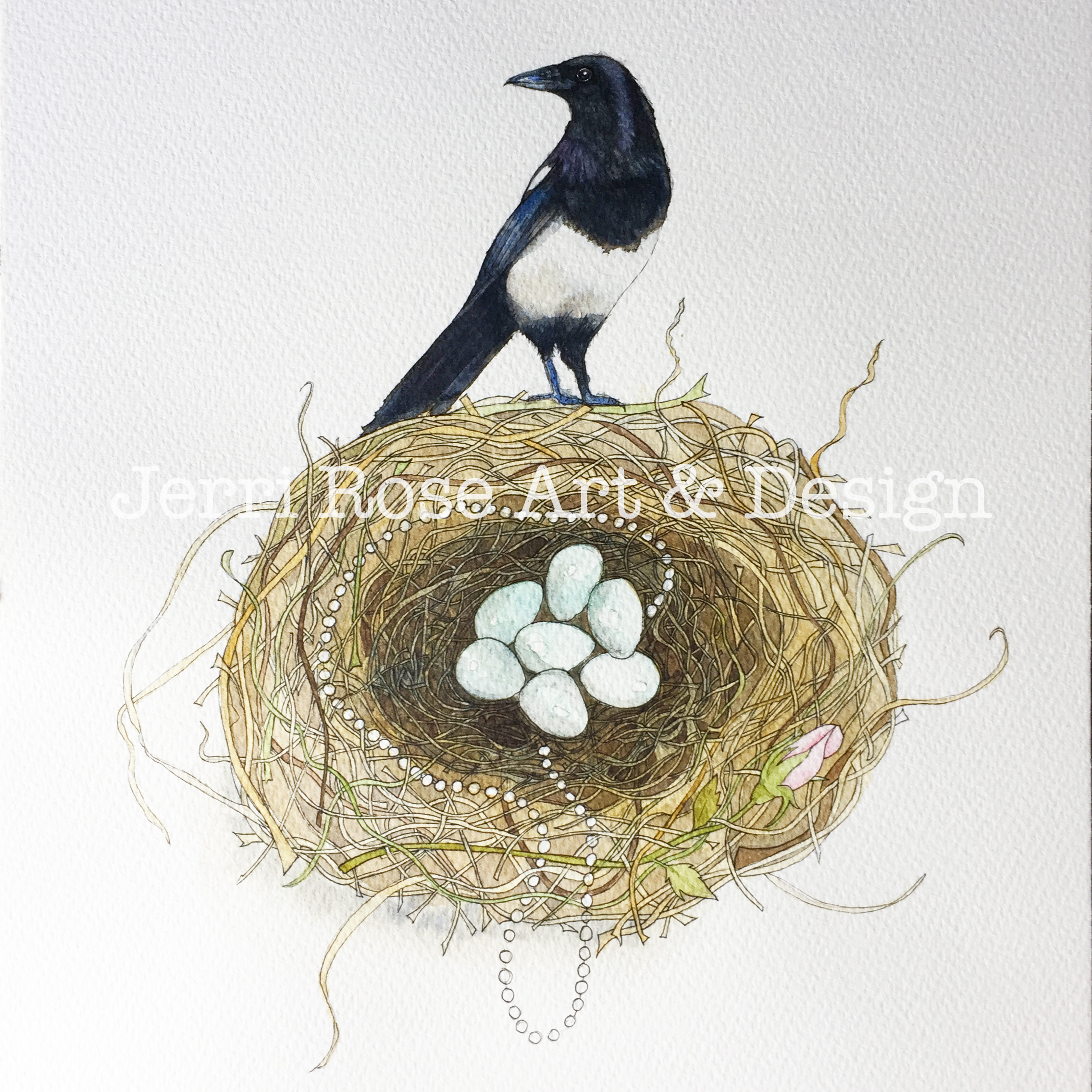 An image showing the final watercolour painting of a Magpie and it's nest..